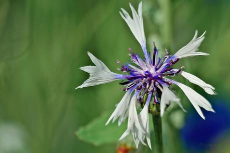 wildflower 14