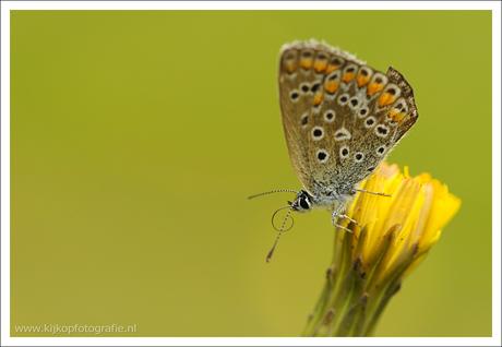 Kijk op vlinder