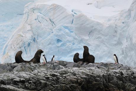 Antarctica, pinguïns en pelsrobben