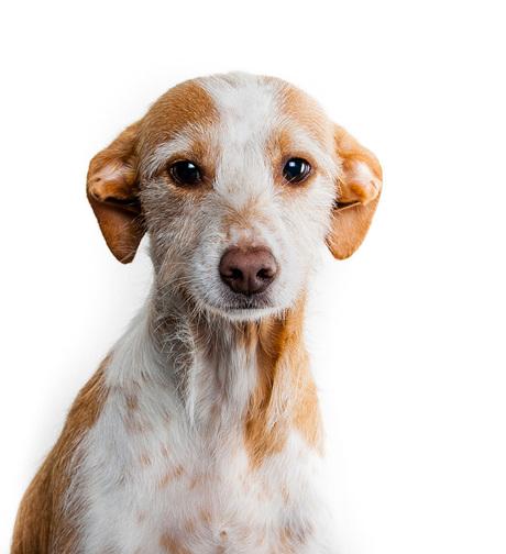 Hondenshoot 1