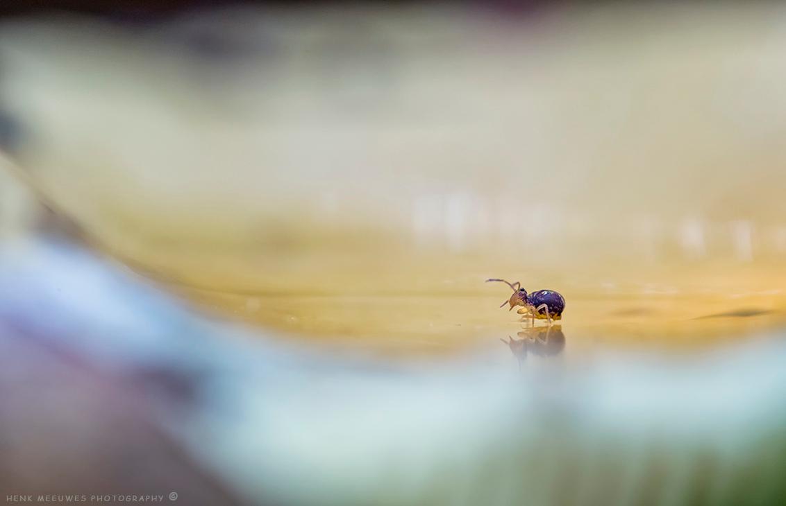 Fotomodel zoomdag Dorst - Gisteren weer een gezellige dag gehad tijdens de Zoomdag van Daan in Dorst. Daar heeft dit springstaartje voor menigeen als foto model opgetreden.  - foto door h.meeuwes op 29-10-2017 - deze foto bevat: dorst, dof, springstaartje, henk meeuwes