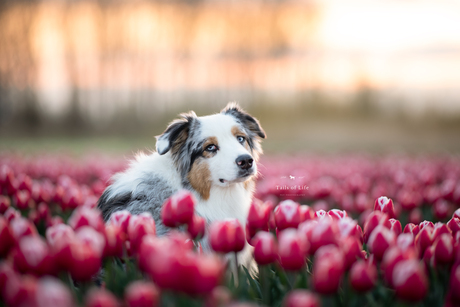 Sunset Flower Girl