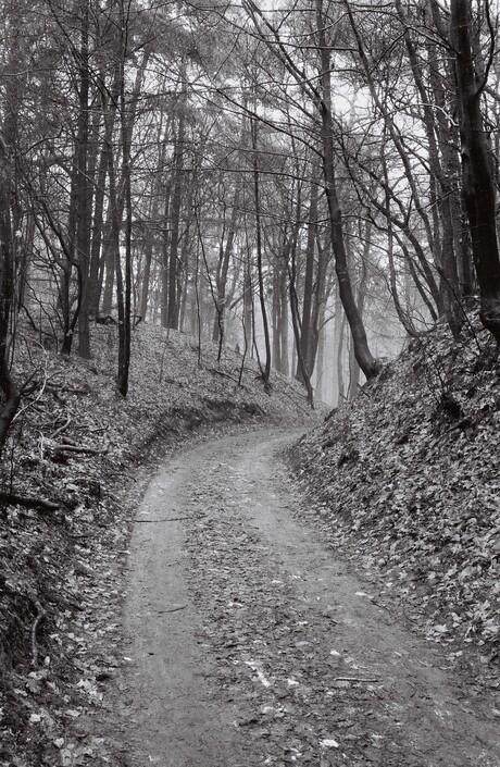 Een wandelpad op de Veluwe