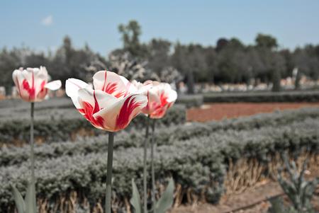 Bloemen (bewerkt) - Bloemen - foto door Joekeloekes op 12-03-2011 - deze foto bevat: bewerkt, bloemen, bewerking