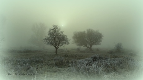 Mist in Lauwersmeergebied