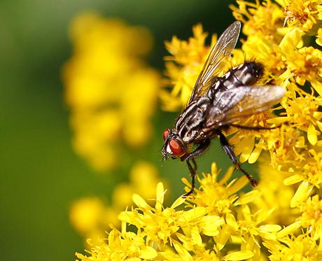 vlieg op geel