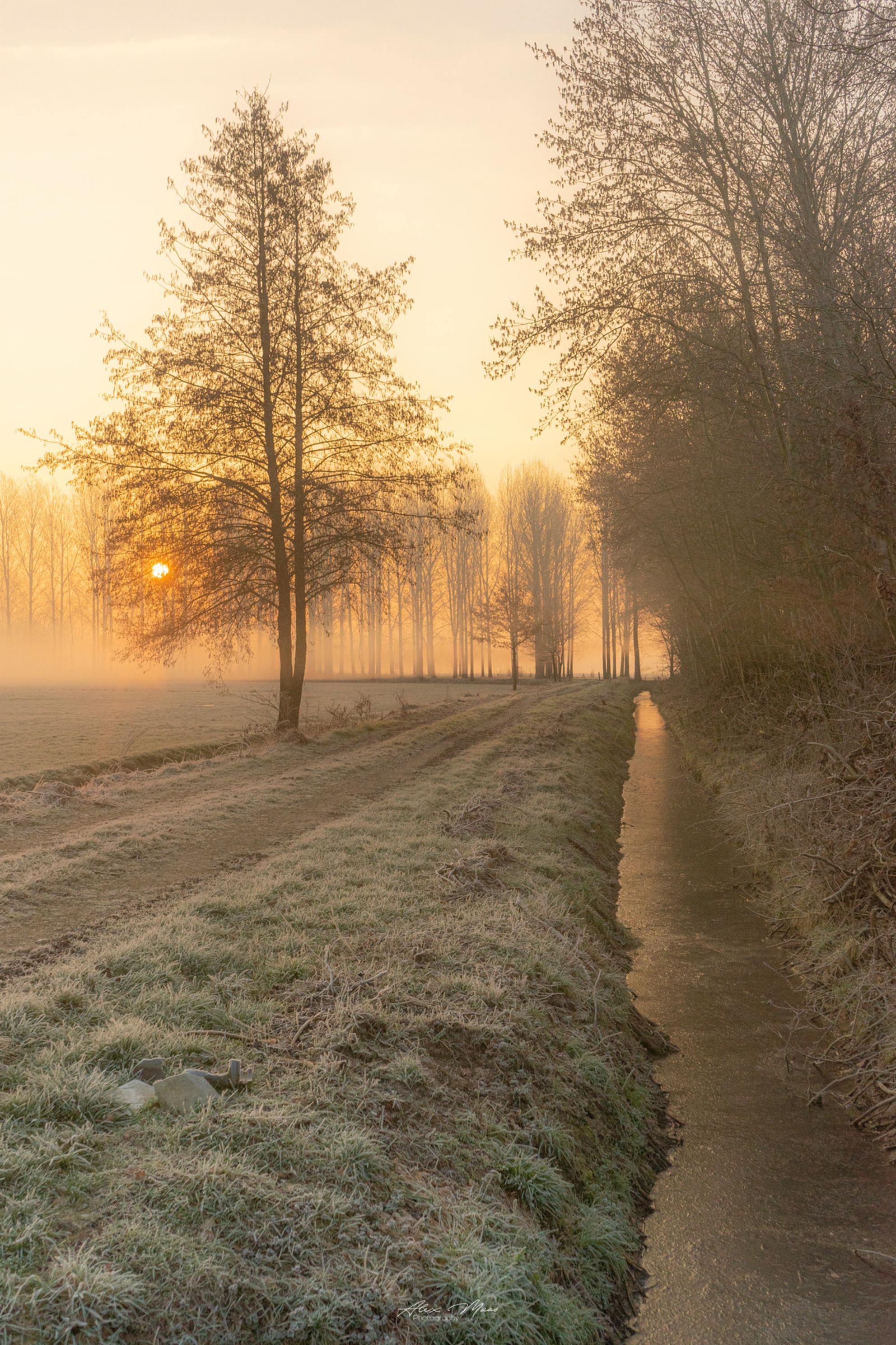 Don't you feel you get value for your day if you've actually watched the sunrise? - Mistige en prachtige omstandigheden bij waterwingebied in Lieshout ☺️ - foto door Alex-Maas1 op 30-03-2021 - deze foto bevat: lucht, wolken, zon, water, dijk, lente, natuur, licht, ijs, landschap, mist, tegenlicht, zonsopkomst, bomen, zand, rivier, polder, hdr, lange sluitertijd