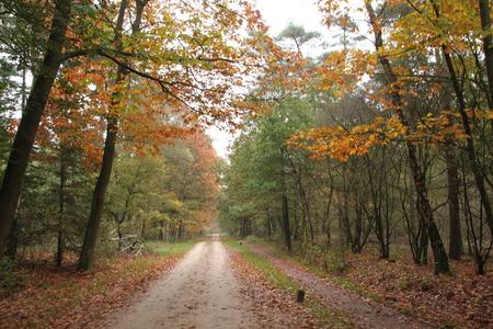 Herfst rondom Zelhem - Een herfstachtig plaatsje. De mooie kleuren van de bomen en het eindeloos doorlopende pad. - foto door smorrie op 11-11-2014 - deze foto bevat: boom