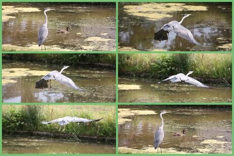 Varia vogels.jpg