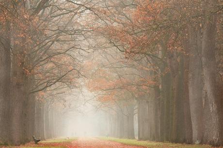 De schoonheid van Mist