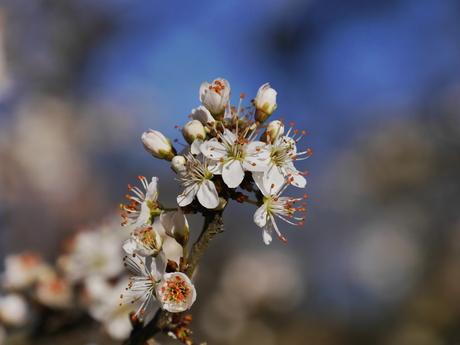 Een bloem voor...