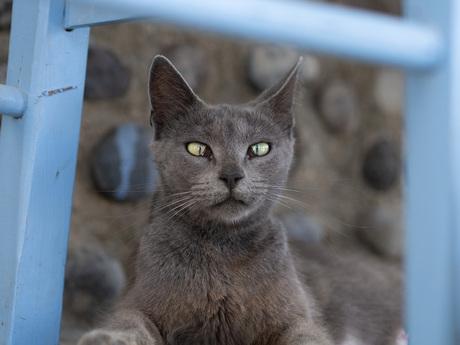 Squinted Cat