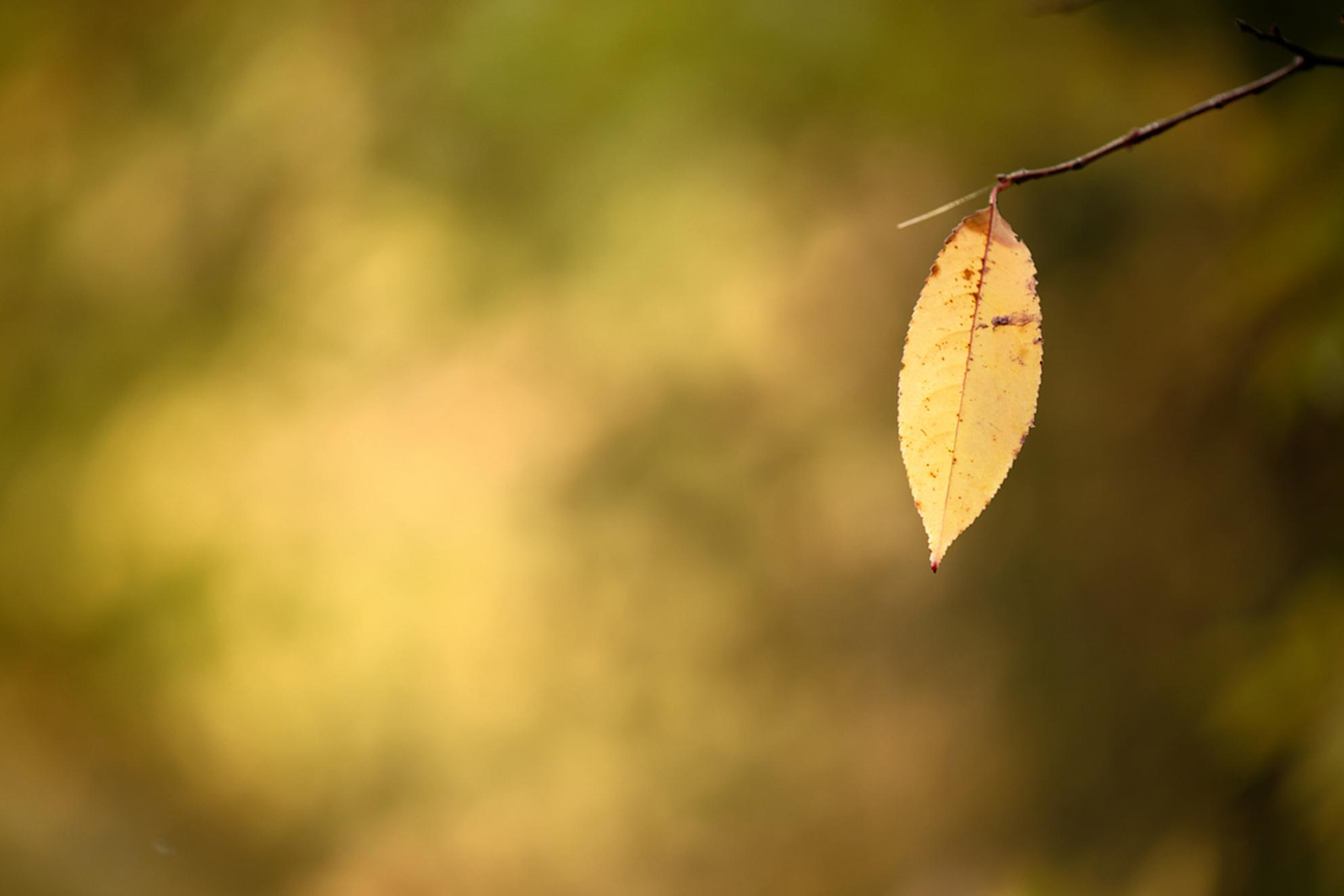 Herst, het laatst blad... - Herfst.  De struik maakt zich op voor de winter. Laatste blad aan de struik. - foto door wilbert.maximus op 22-10-2019 - deze foto bevat: natuur, herfst, blad, landschap, bomen, nikon, eenzaamheid, minimalistic, negative space, d850, tamron 70-200mmg2 - Deze foto mag gebruikt worden in een Zoom.nl publicatie
