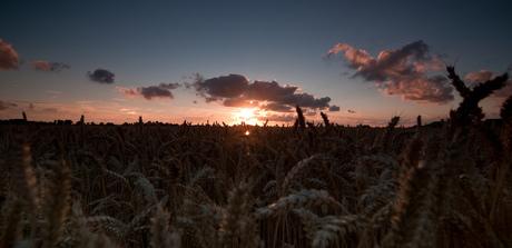 Hoeksewaards landschap