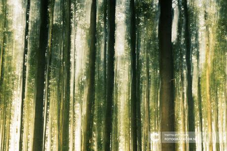 Spycho woods