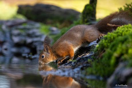 eekhoorn heeft dorst