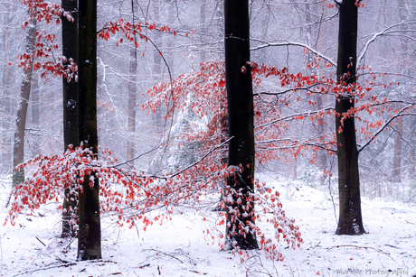 Color in the snow
