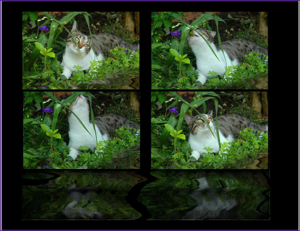 Toffee - Een floodfilter gevonden op internet , en nog ff snel uitgeprobeerd ... enfin ik snap er nog geen bal van , maar het is weer leuk speelgoed . Nu snel - foto door WildIsh op 24-06-2008 - deze foto bevat: bewerkt, flood, filter, flaming, ish, toffee, pear