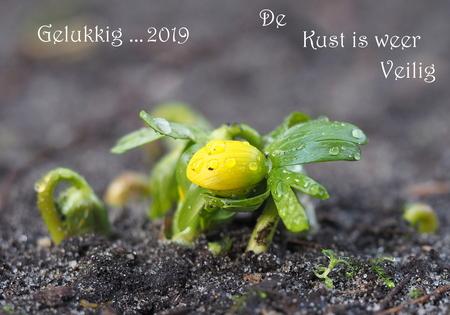 Onder Duiker... - Laat zich weer zien... Oefff,bommen en granaten... Elk jaar word het  erger ... Extreem . Voor mij en de Katten ,zeg ik ,ga weer terug  naar  de  - foto door pietsnoeier op 01-01-2019 - deze foto bevat: bloem, natuur, geel, tuin, nieuwjaar, winter, winterakoniet, 2019