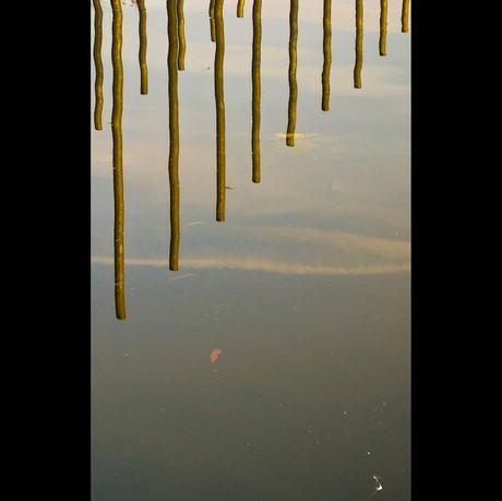 In het water 4