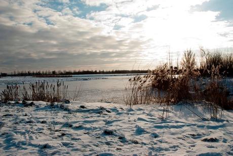 Ruisend riet boven het ijs