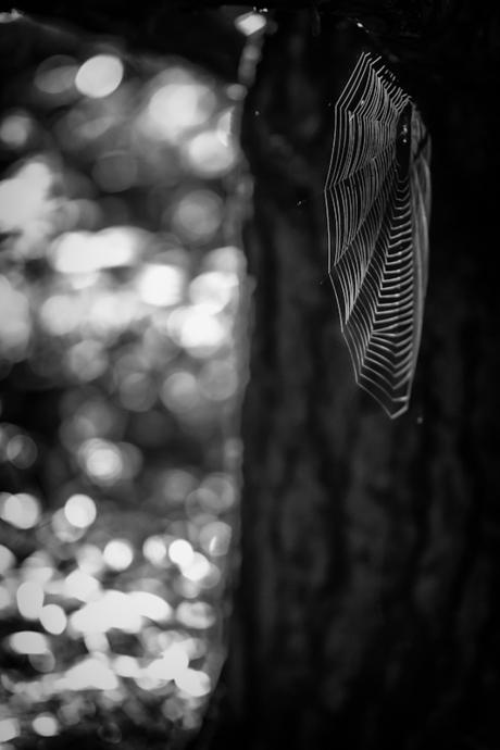 Lightning spiderweb