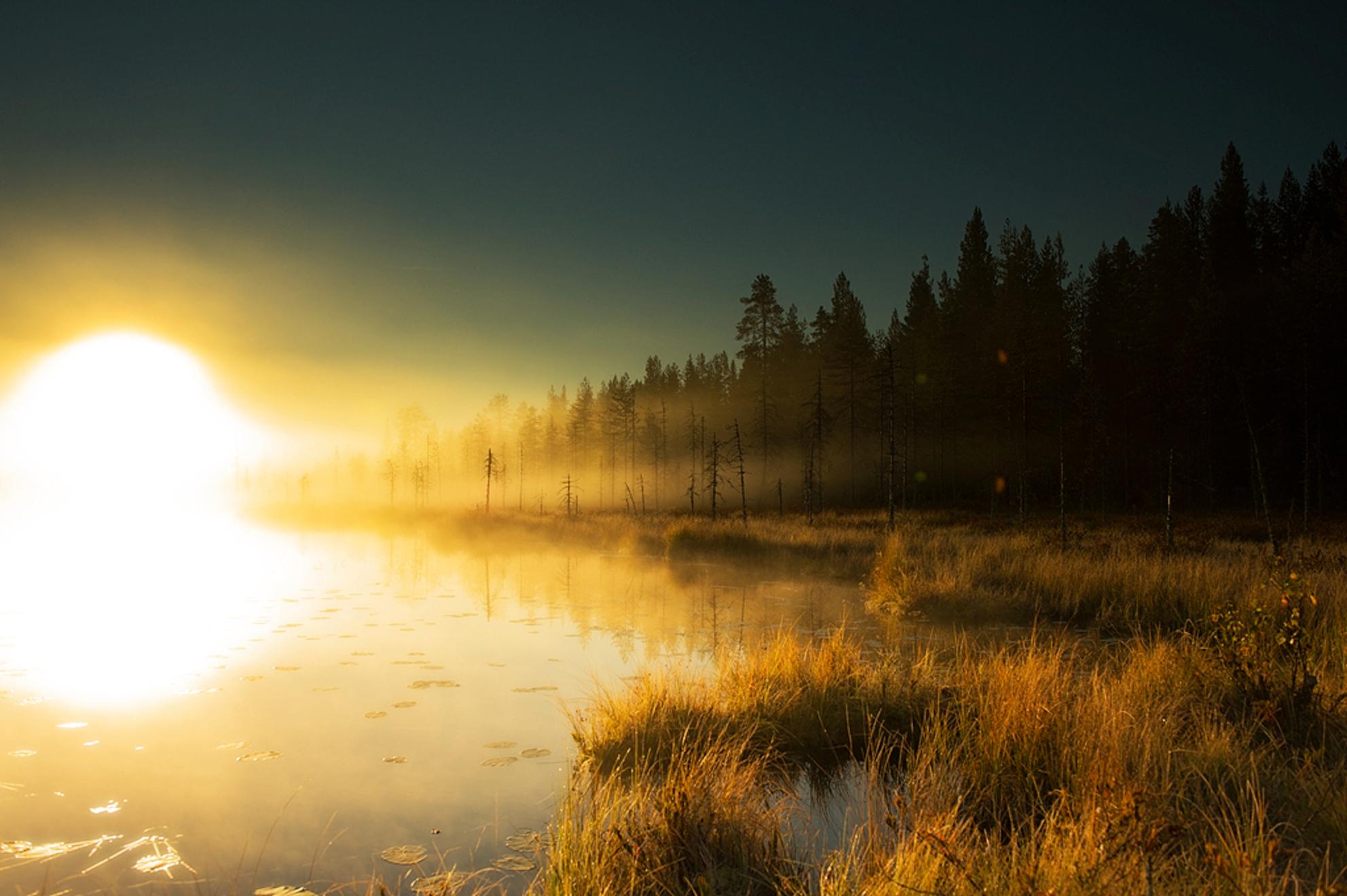 Zonsopgang - Zeer vroeg opgestaan want de weersvoorspellingen zagen er gunstig uit voor een zonsopgang. Eenmaal aangekomen bij het meer hing er een mooie laag mis - foto door SilverRain op 13-10-2013 - deze foto bevat: landschap, nikon, finland, d4, 24-70