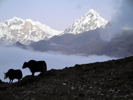 Annapurna South 4 (Nepal)