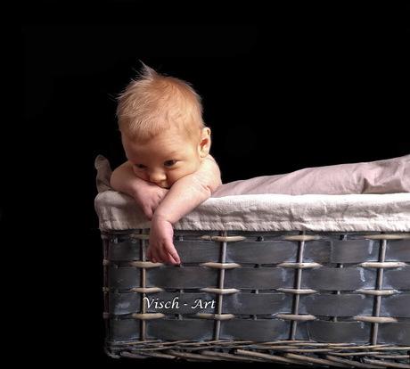 2 weken oud en hij wil al vliegen in een mandje