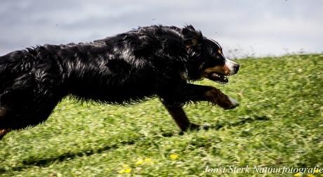 Running wild part 1