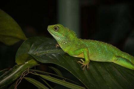 Hagedis - - - foto door Liekie1982 op 13-04-2015 - deze foto bevat: groen, dierentuin, hagedis, artis, reptiel