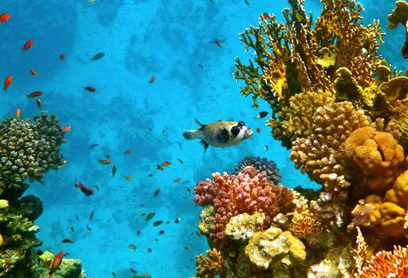 Geweldige onderwaterwereld!
