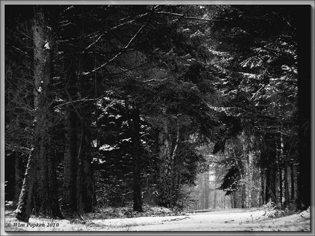 Door de bomen het bos zien.
