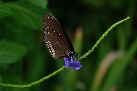 Vlinders in Emmen.