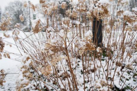 Contrast in de sneeuw