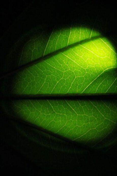 groen wereld
