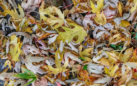 haloweenbladeren