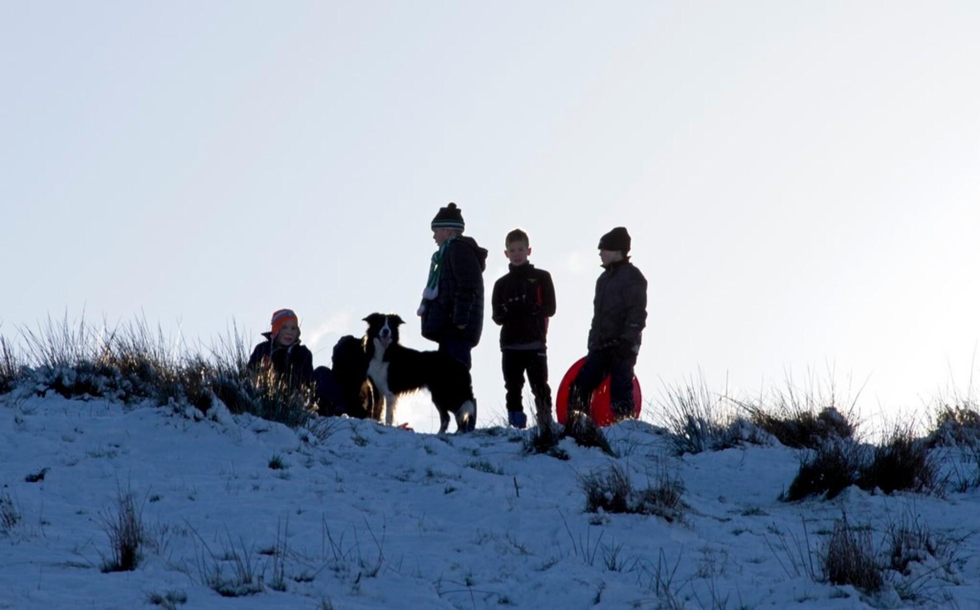 Wachten - Ik weet dat niet alle kinderen kijken. Maar, vond het toch wel iets moois uitstralen. De kinderen staan te wachten. Totdat ze met de slee van de VAM - foto door Jaqueline01 op 17-01-2016 - deze foto bevat: sneeuw, winter, hond, kinderen, heuvel, slee - Deze foto mag gebruikt worden in een Zoom.nl publicatie