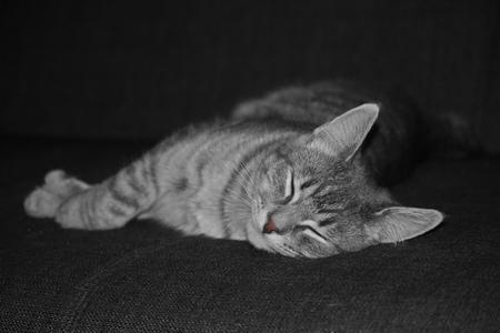 Milo #1 - Milo lag weer eens helemaal out of order op de bank...ondanks dat Milo grijs is en de bank donkergrijs, heb ik de foto zwart/wit gemaakt en alleen zi - foto door DaBone op 29-11-2010 - deze foto bevat: kat, canon, eos, cat, 400d