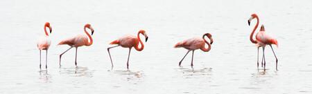 Zoekt en gij zult vinden - Tijdens mijn rondreis door cubu, kwam ik op een plek aan waar Flamingo´s zouden moeten zitten. Na lang zoeken had ik ze dan eindelijk gevonden, en l - foto door MaasJan82 op 21-03-2013 - deze foto bevat: roze, cuba, water, natuur, vogels, flamingo, dieren, vogel, flamingo´s