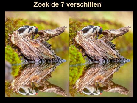Zoomer-0282-bw