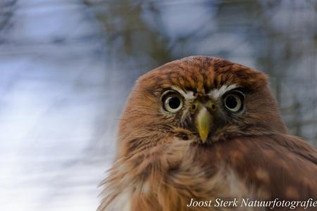 What are you looking - Ook deze foto komt uit het Uilendierenpark De Paay - foto door joost-sterk op 14-06-2015 - deze foto bevat: uil, dierentuin, natuur