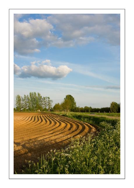 Aardappelveld (1)