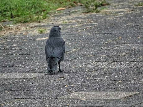 "Herfst - ""Follow Me!"""