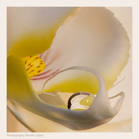 Orchidee e