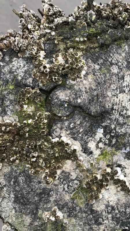 Paalhoofd - Paalhoofd. - foto door JNSSN op 29-03-2018 - deze foto bevat: strand, zee, water, strandpaal, zeeland, detail, paalhoofd, westenschouwen