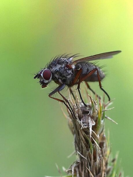 its a fly