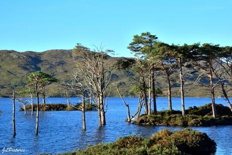 eilandjes in Loch Assynt