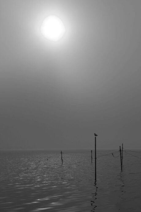 Optrekkende mist