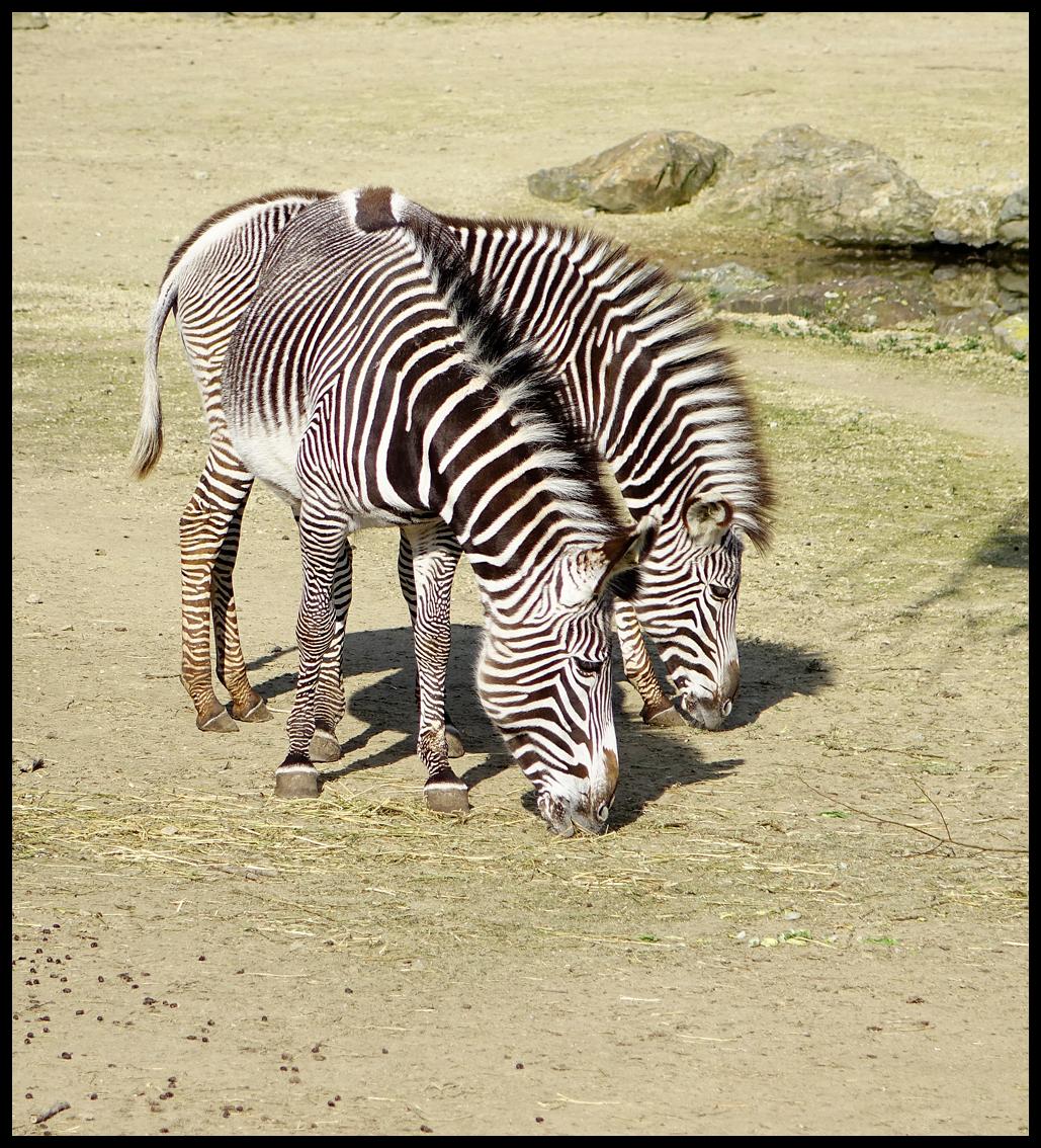 """Er loopt.... - ..een streepje door. En ik zou willen zeggen:""""Door wie niet"""". :) groeten, Nel - foto door Nel Hoetmer op 23-03-2014 - deze foto bevat: dieren, nel"""